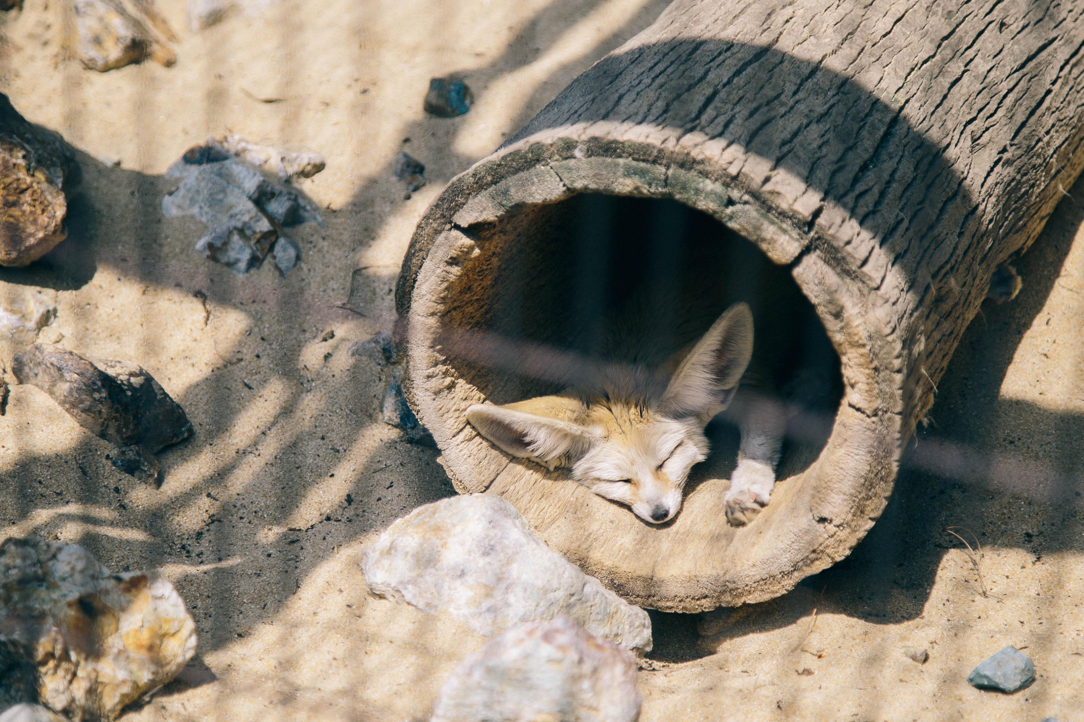 井の頭動物園3