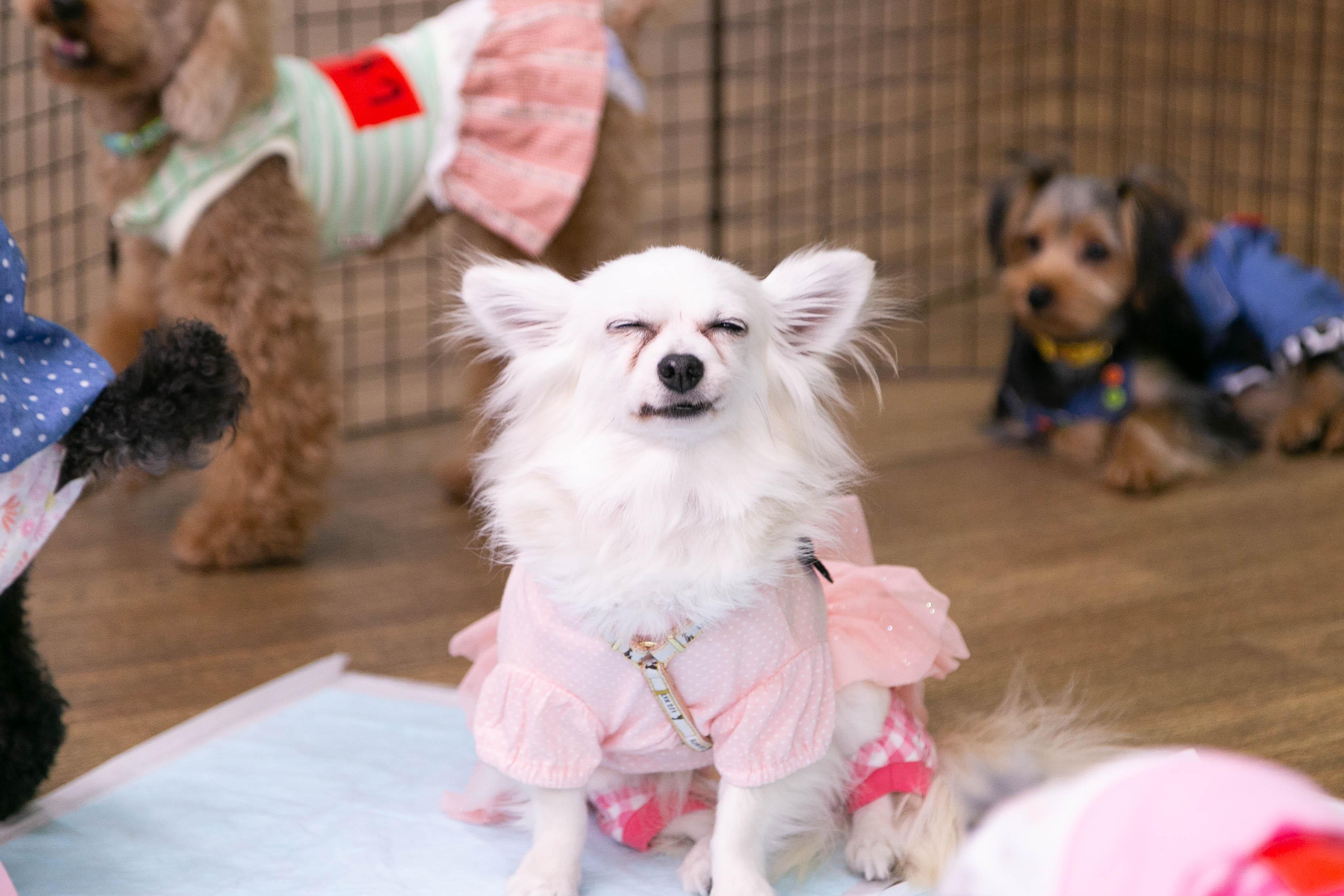ハッピー犬屋敷の保護犬01