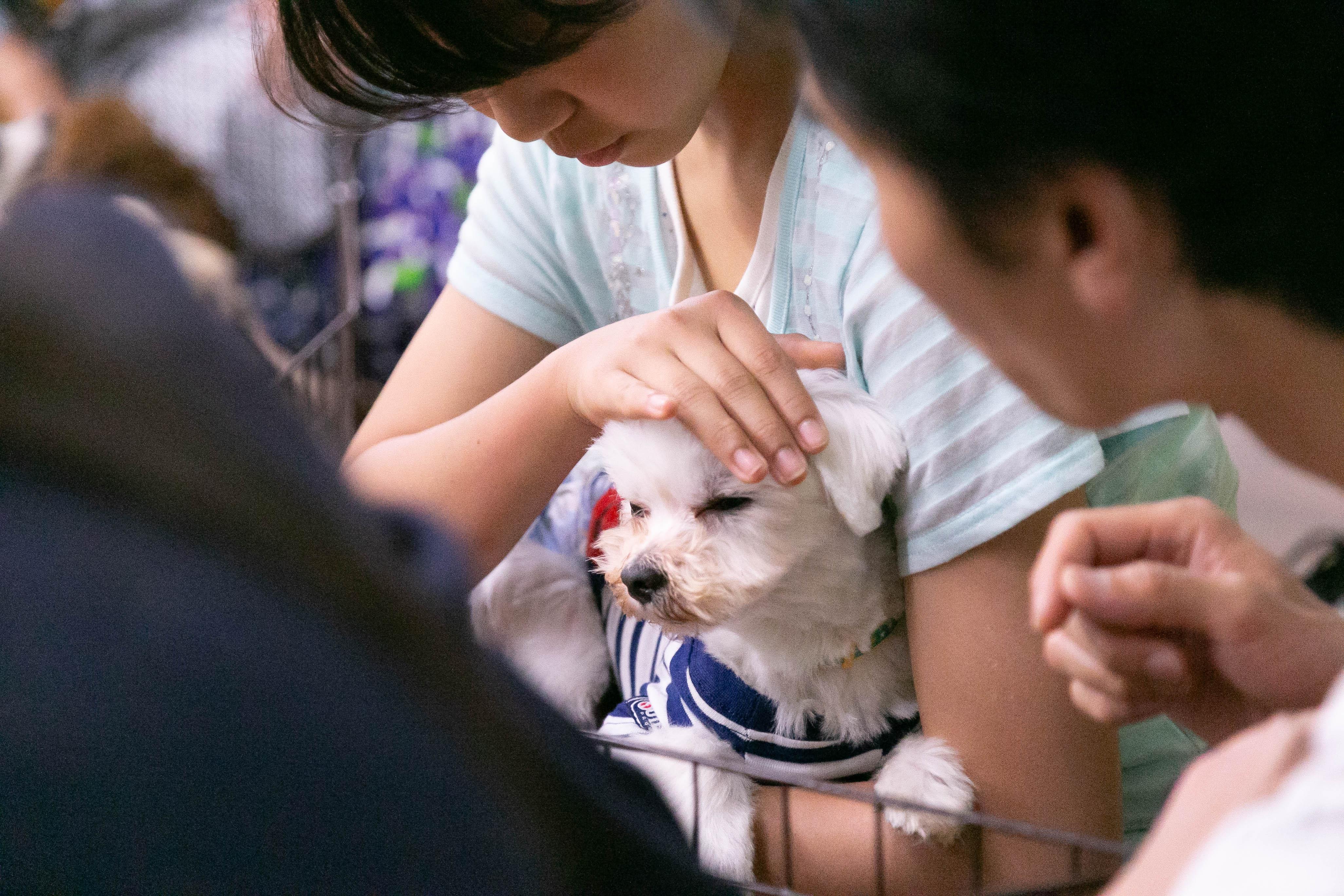 ハッピー犬屋敷の保護犬02