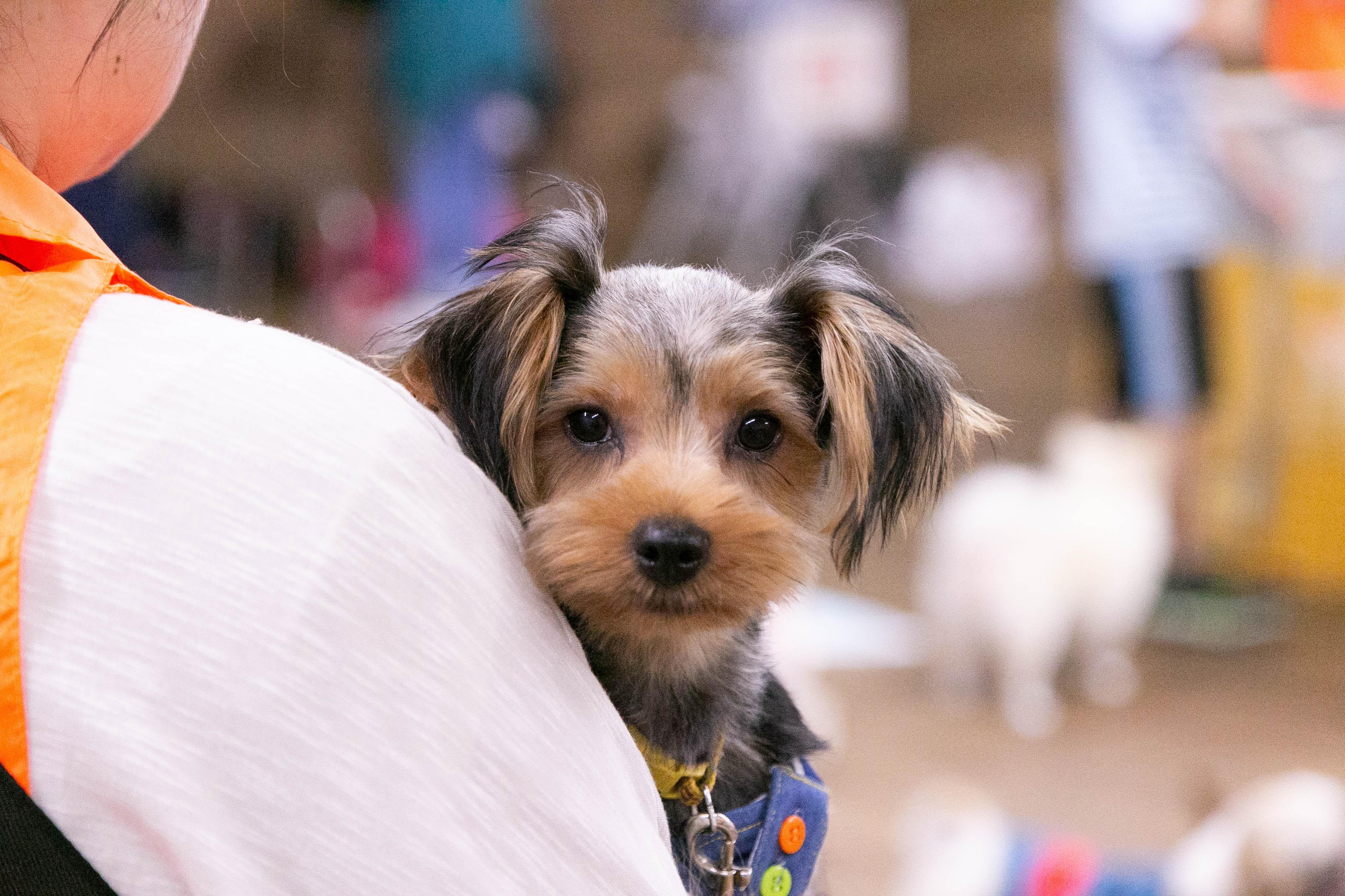 ハッピー犬屋敷の保護犬03