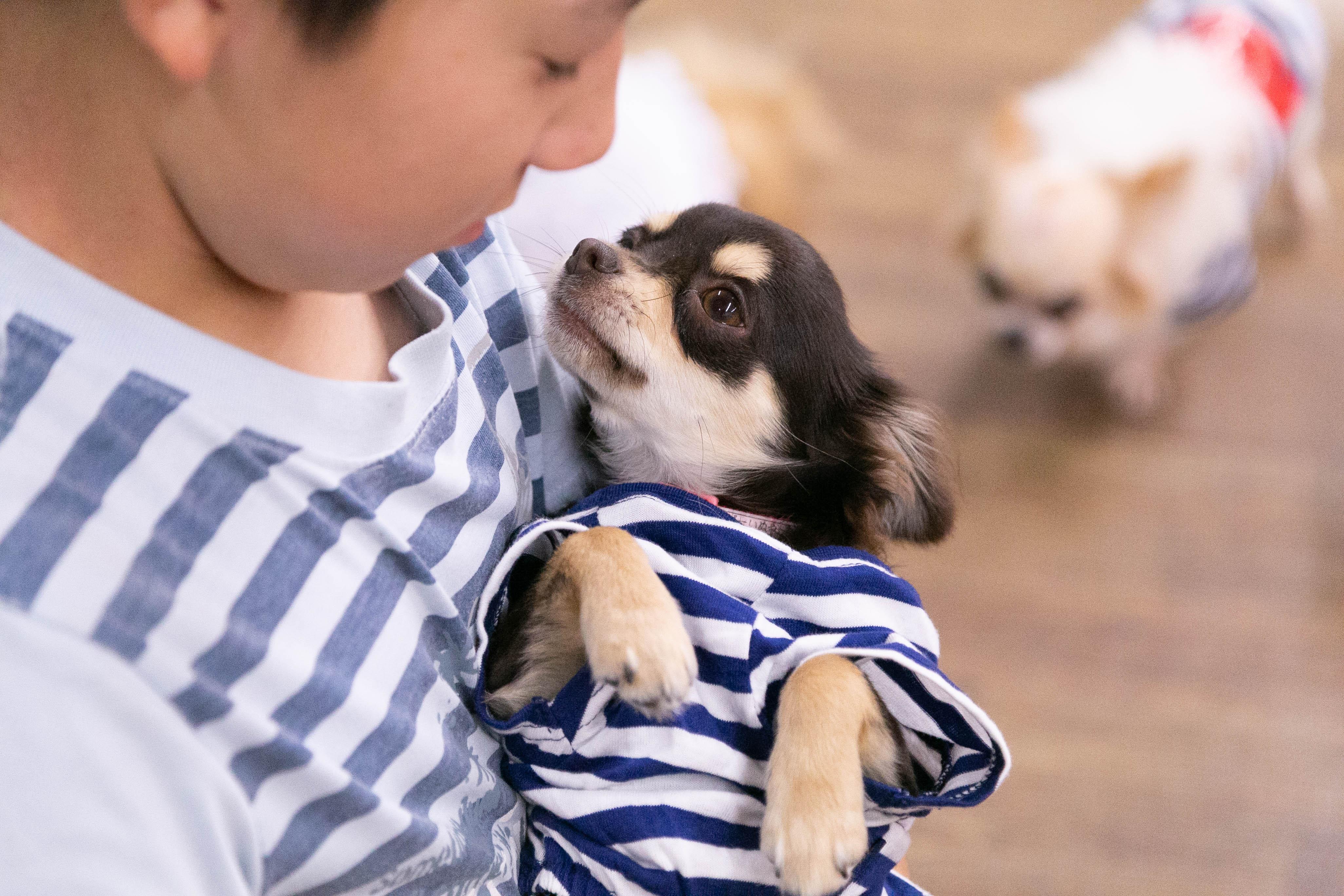 ハッピー犬屋敷の保護犬04